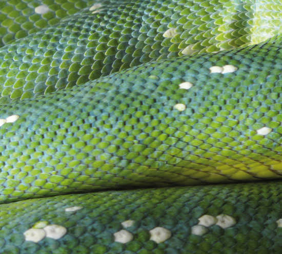 La crema de Veneno de Serpiente de Uresim