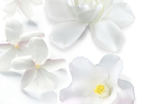 flores blancas Cofre Huile Sensorielle de Lierac