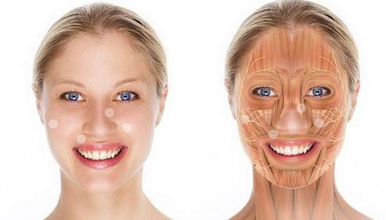 músculos del rostro