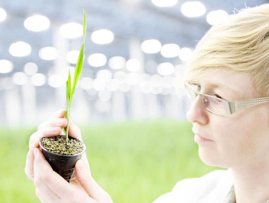 Bioeffect, desde Islandia con ciencia