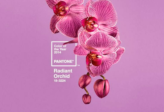 color pantene radiant orchid